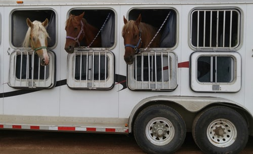 High Quality Horse Trailers Outward-push Window